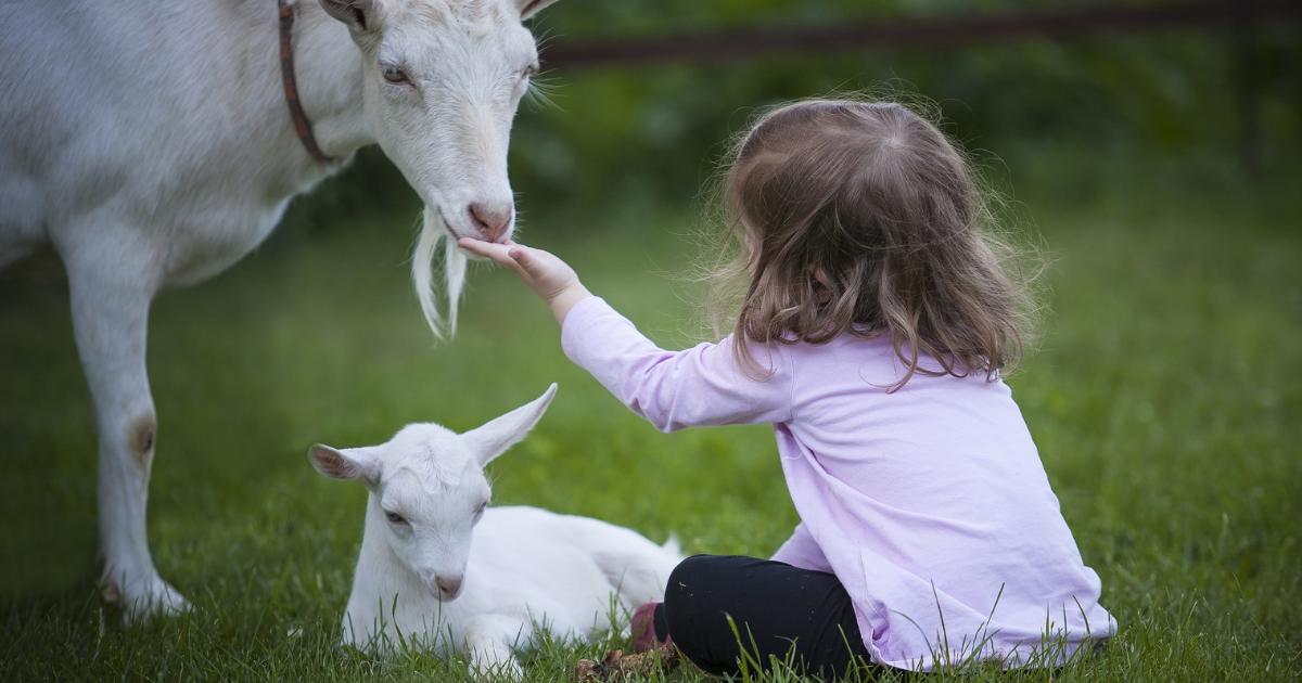 formule a base di latte di capra per l'infanzia